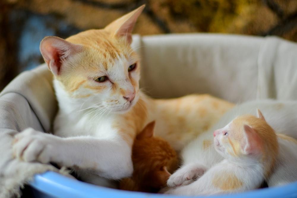 orange tabby cat on blue plastic basin