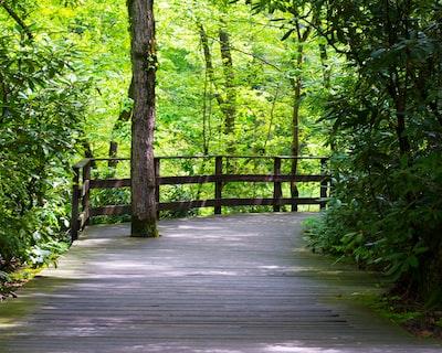 brown wooden bridge in the woods pennsylvania teams background