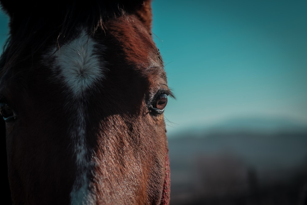 brown horse with white eyes