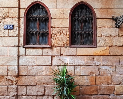 green plant in front of brown window cairo zoom background