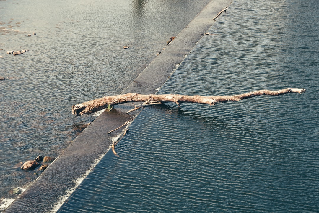 Oeuvre d'art avec un tronc sur un bras de fleuve