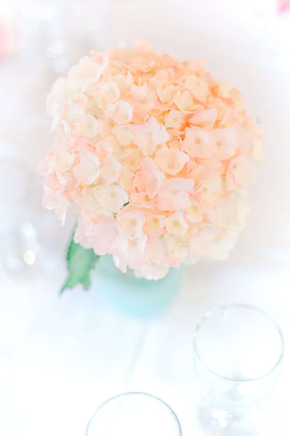 white cluster flower in close up photography