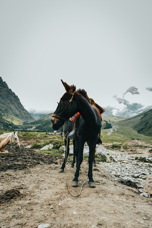 brown horse on brown soil during daytime