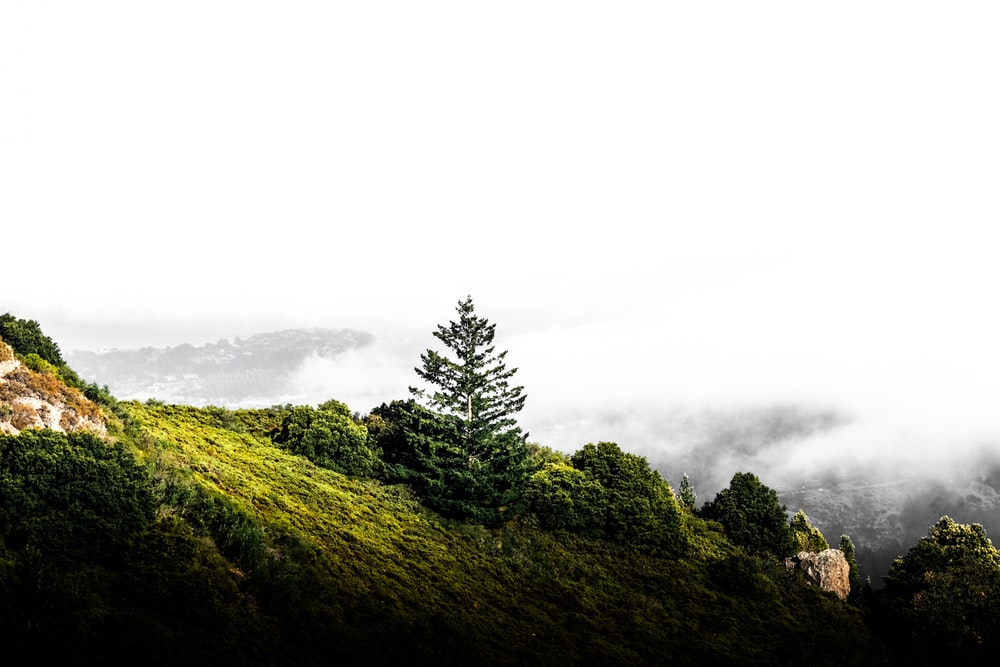 green trees on mountain under white sky during daytime