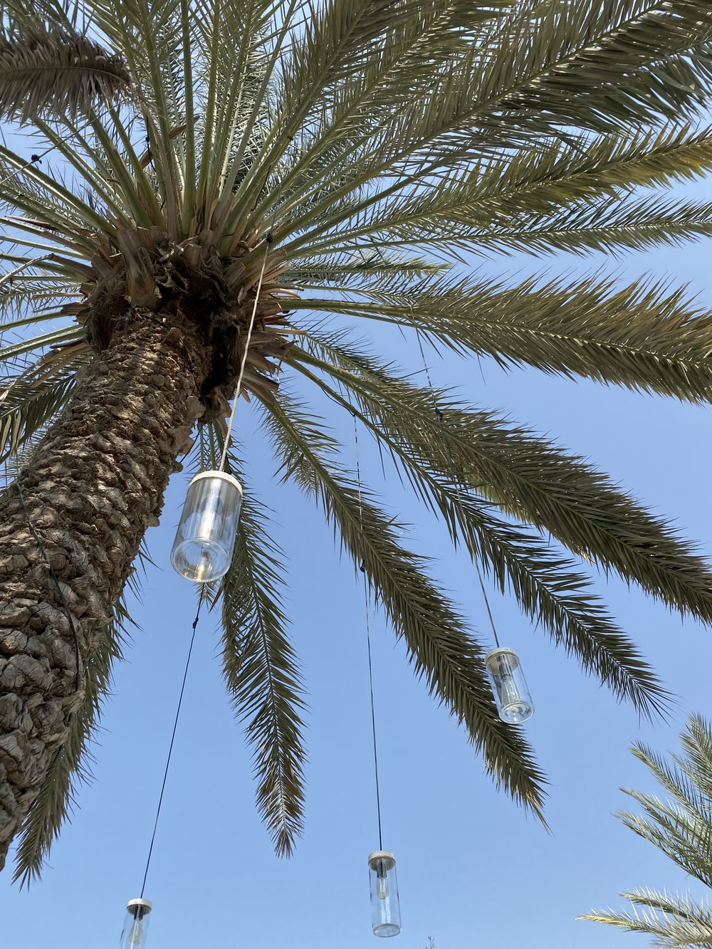 low angle photography of palm tree during daytime