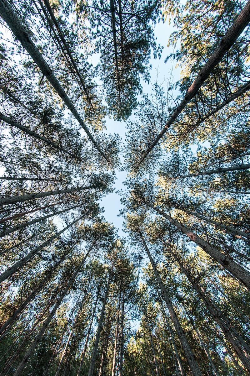 下から見上げた森林