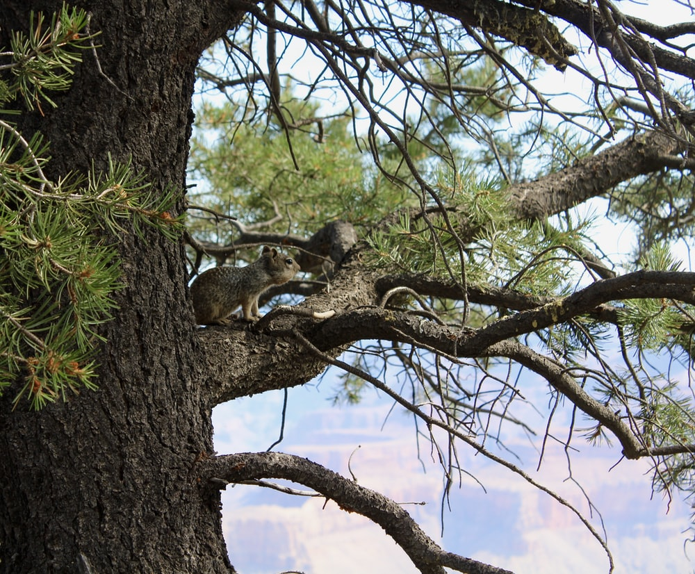 brown squirrel on brown tree during daytime
