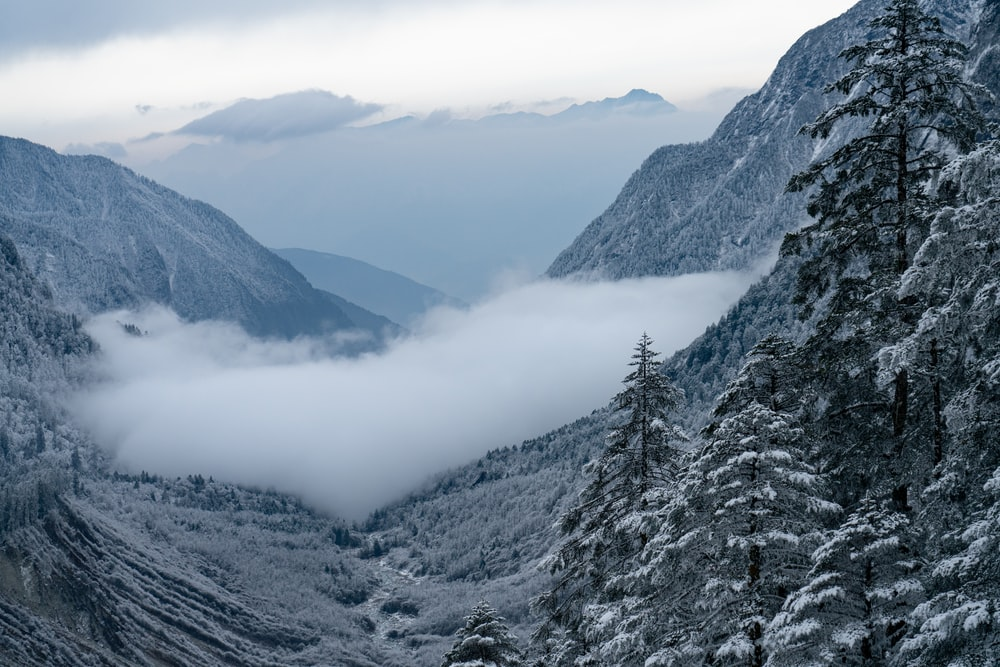 snow covered mountains and trees