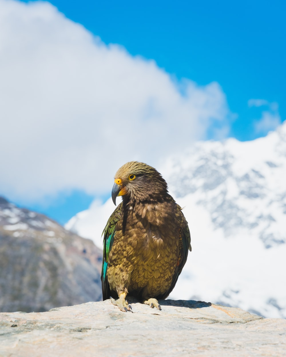 brown and green bird on gray rock during daytime