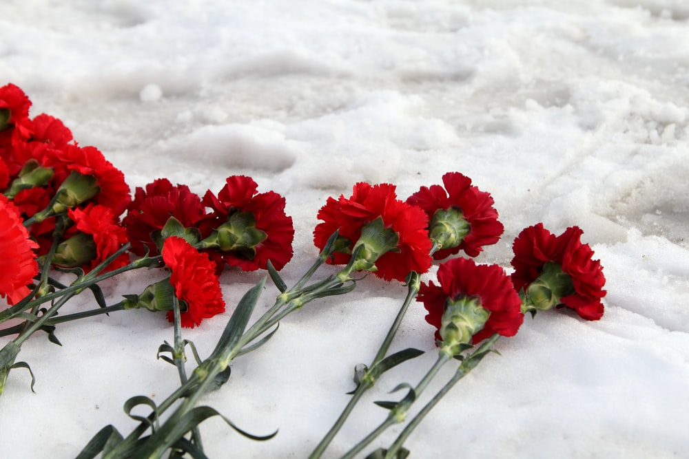 red flowers on snow covered ground