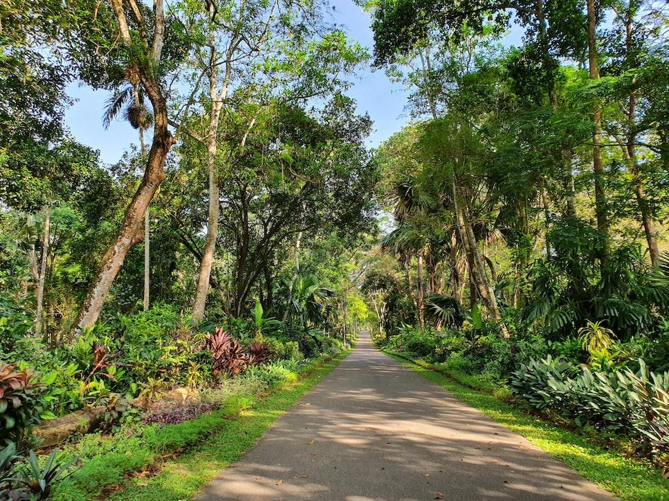 Gampaha srilanka