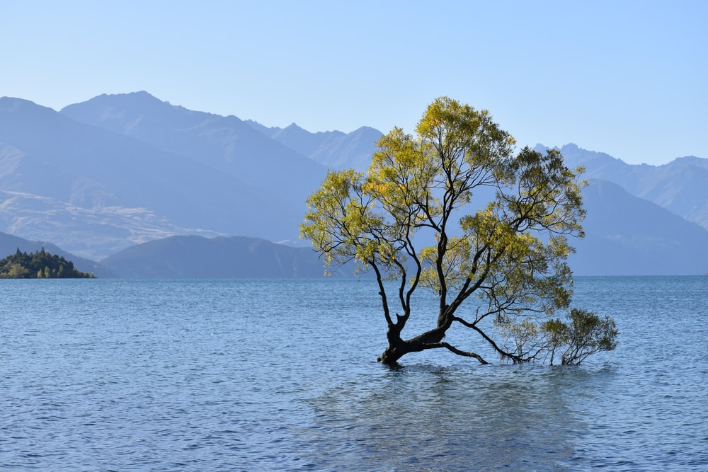 green tree on body of water during daytime