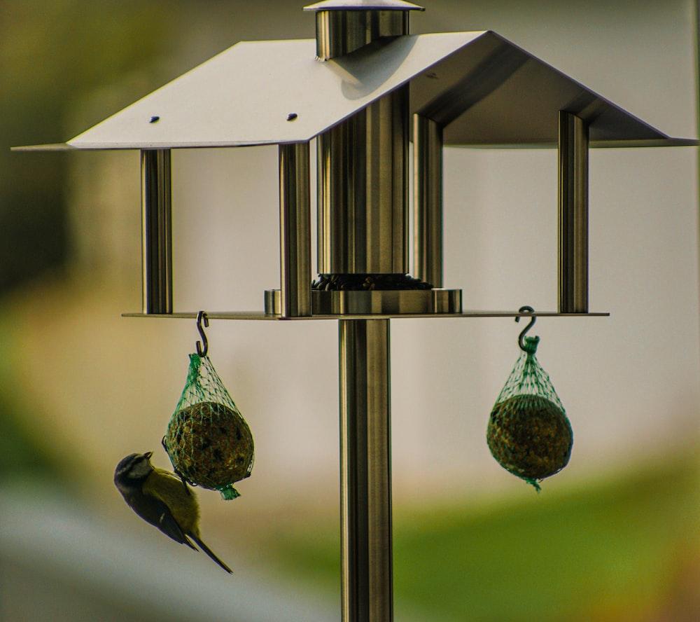 black and green bird on black steel bird cage