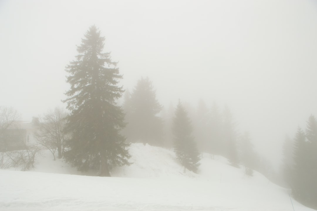 I wanted to capture that sensation of trees appearing in the mist. They only become visible or defined as you get close. the winter scene on the mountainside changed the view to black and white.