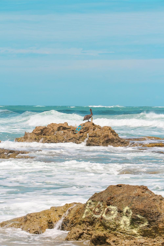 white bird on brown rock near body of water during daytime