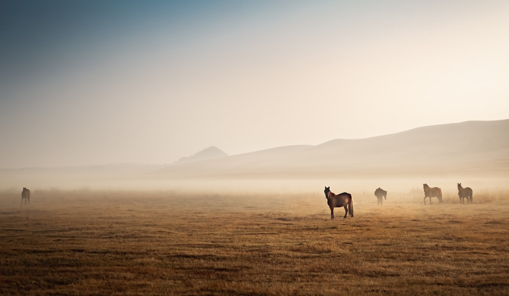 three people riding horses on brown field during daytime