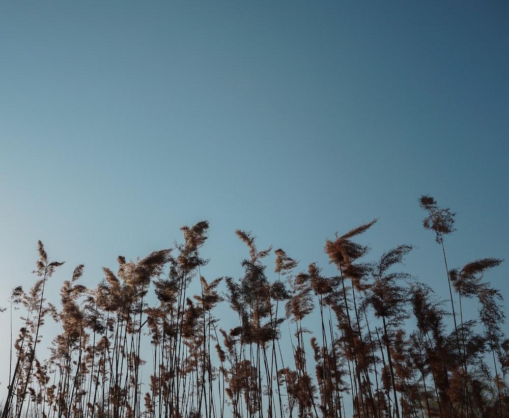 brown plants under blue sky during daytime