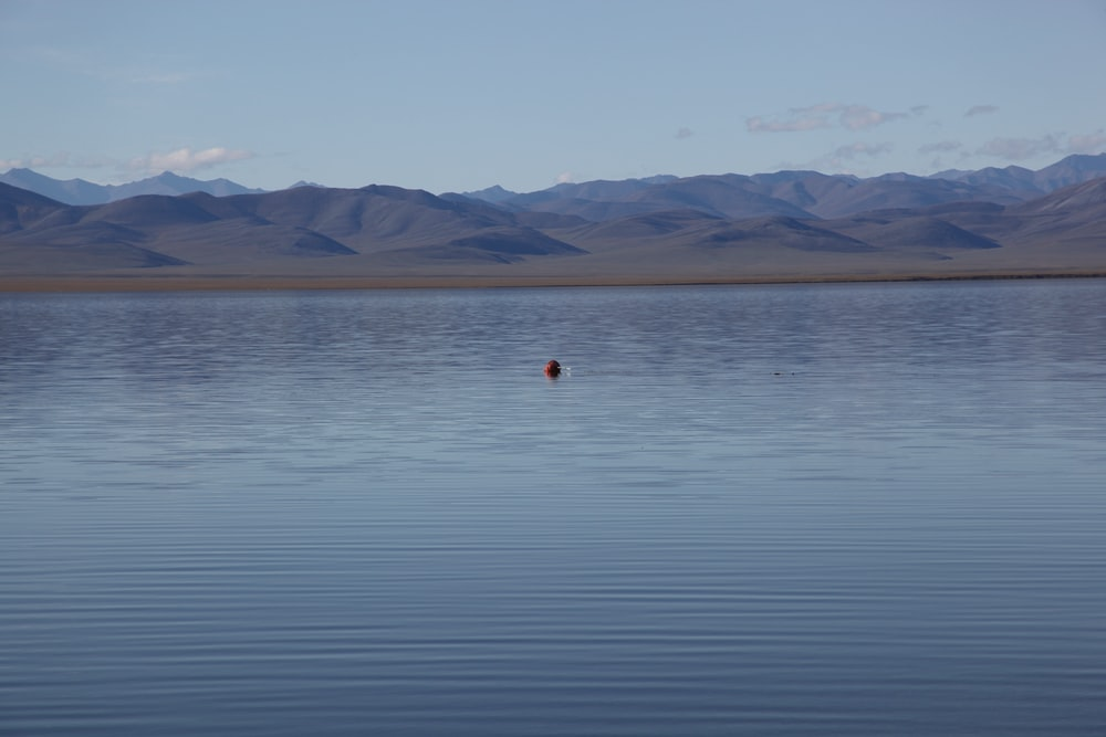 person in red shirt standing on body of water during daytime