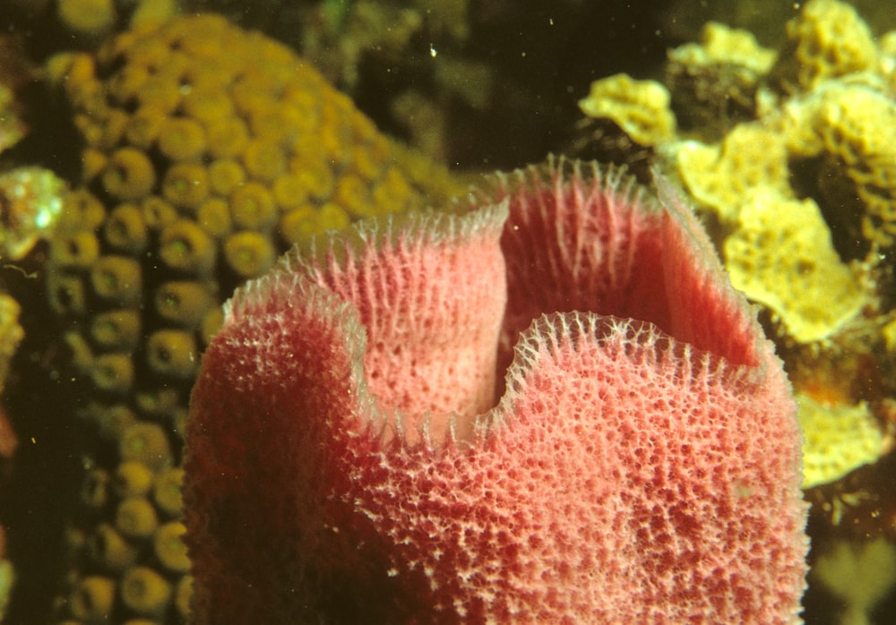 red and white coral reef