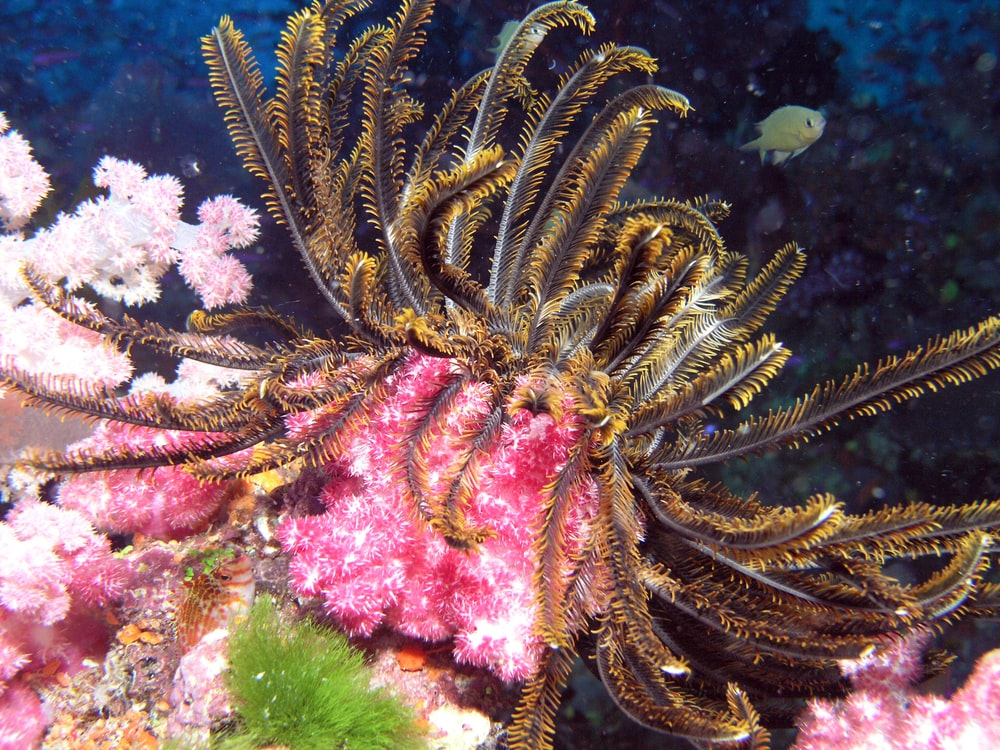 brown and white coral reef
