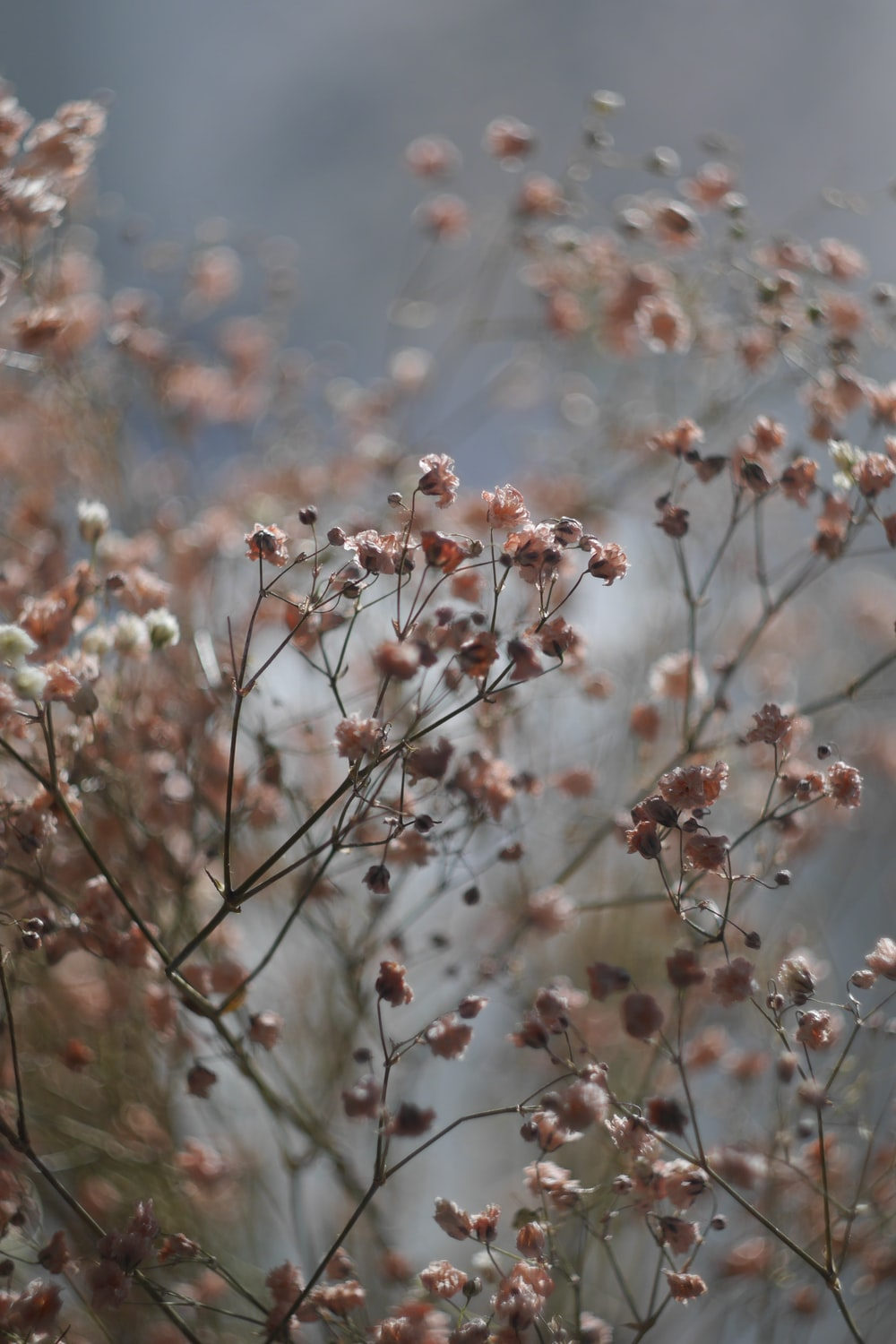 white and brown flowers during daytime