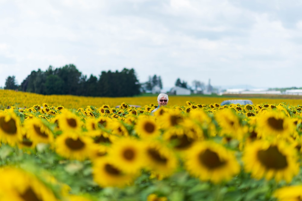 yellow sunflower field under blue sky during daytime