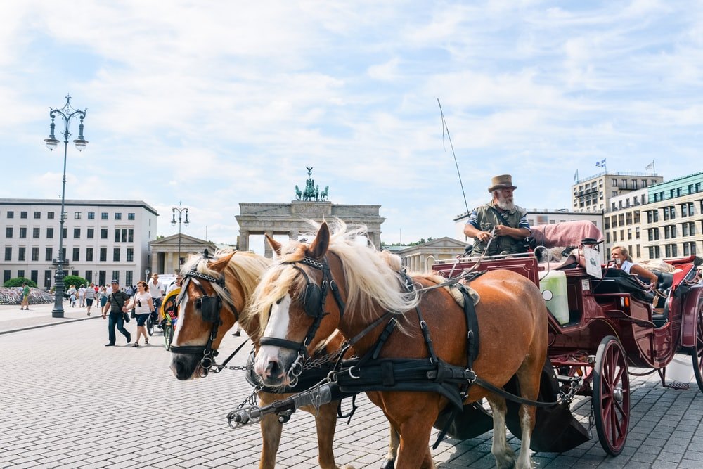 people riding horses on street during daytime