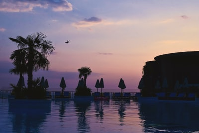 silhouette of palm trees near body of water during sunset albania zoom background