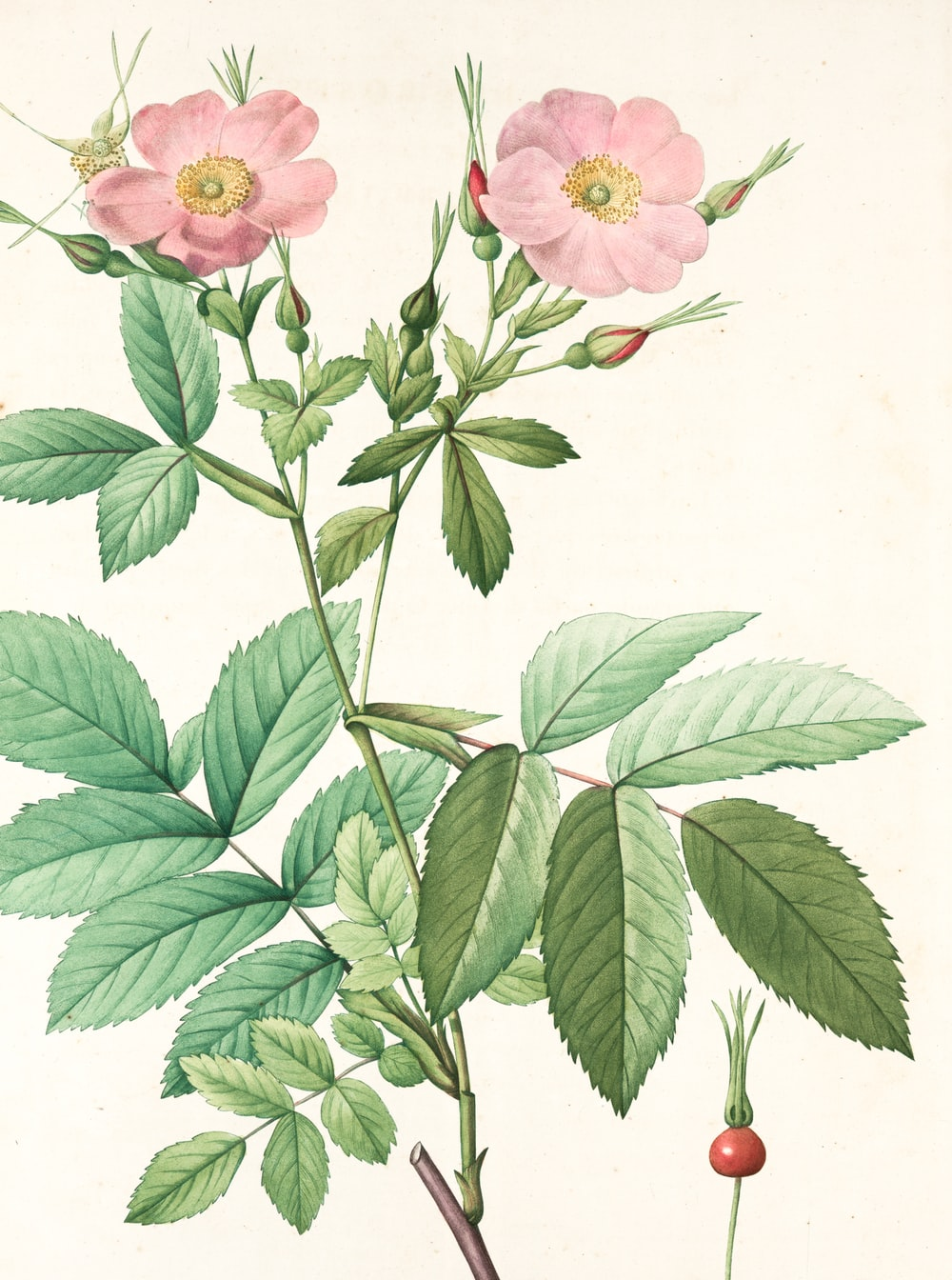 pink and green flower painting
