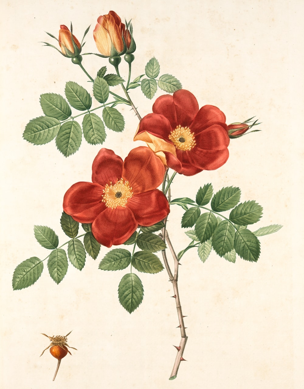 red flower with green leaves painting