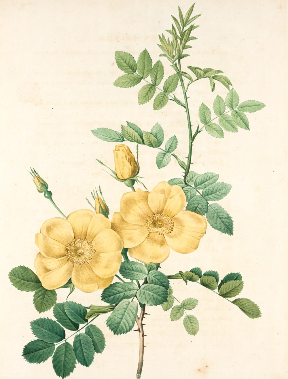 yellow and green flower painting