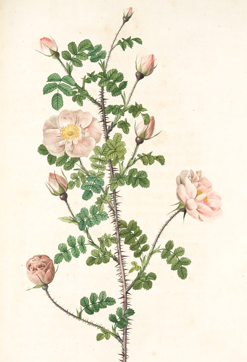 pink and white flowers painting