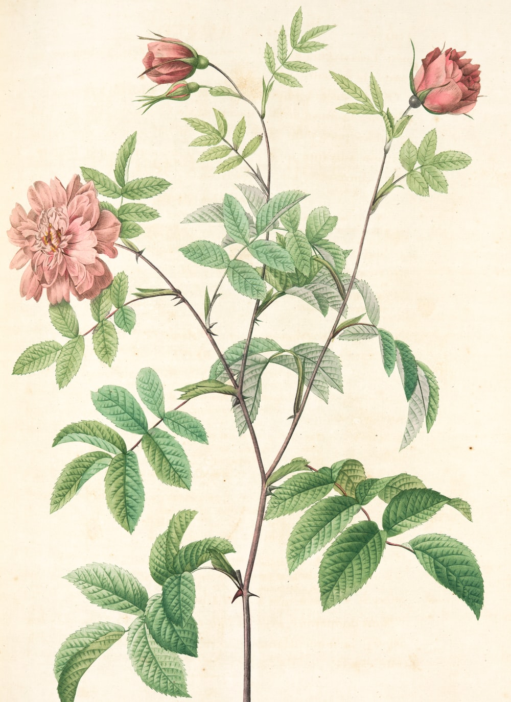 pink flower with green leaves painting