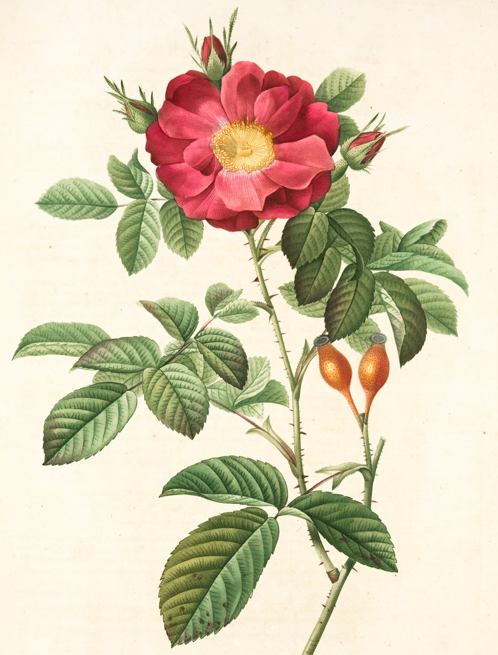 pink flower with green leaves illustration