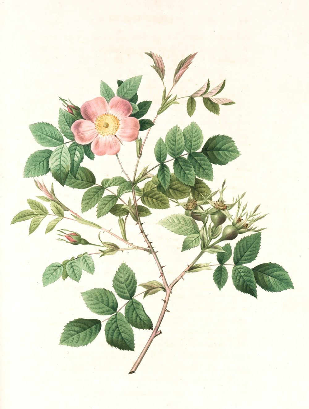 pink and green flower illustration