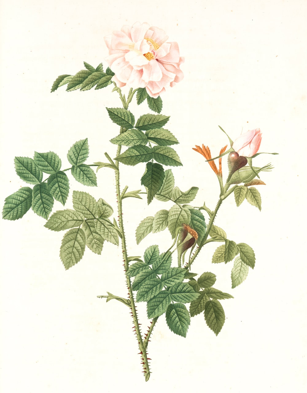 pink and white flowers with green leaves