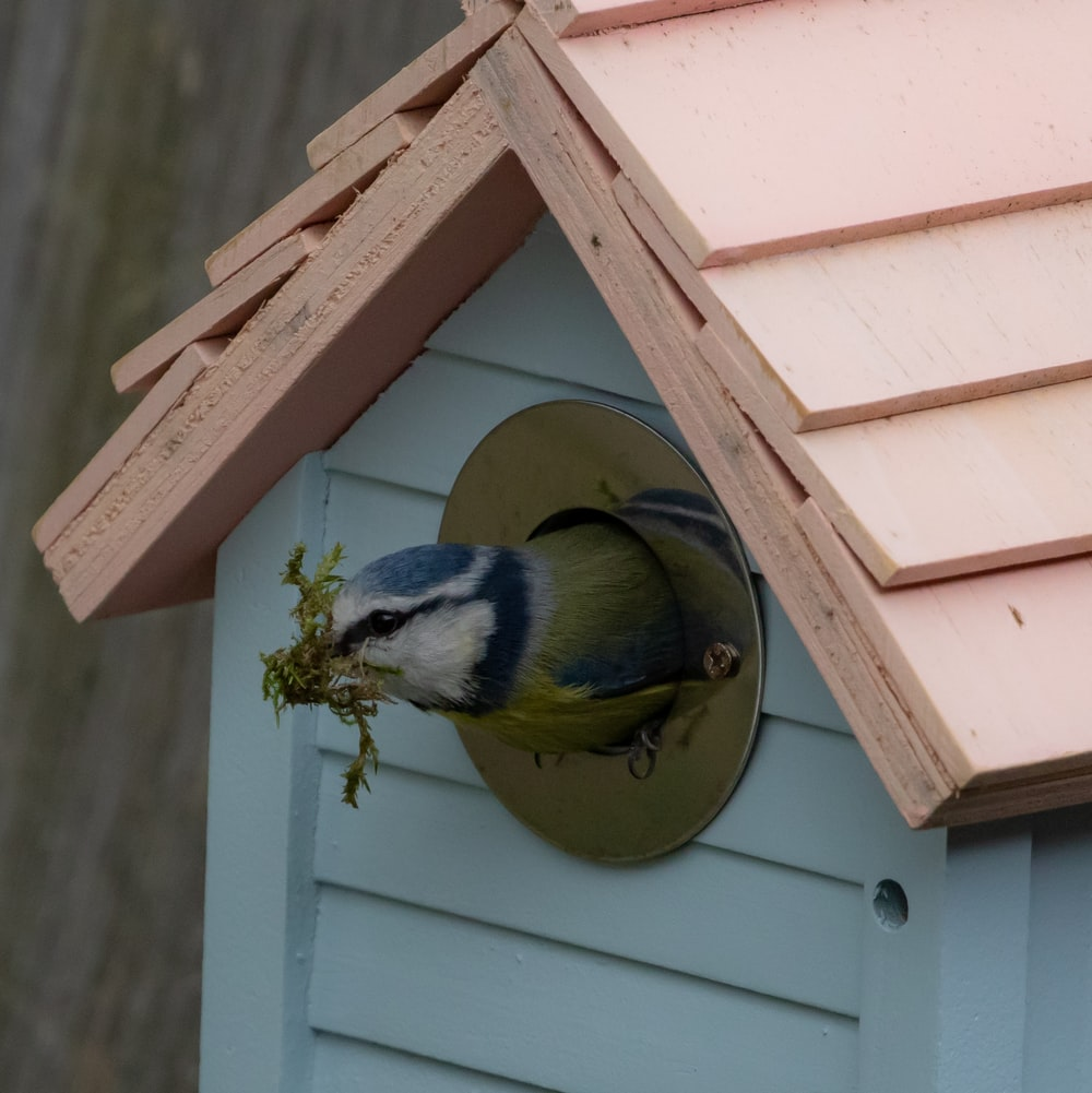 blue and yellow bird on brown wooden bird house