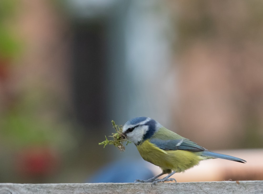 blue white and yellow bird on brown tree branch