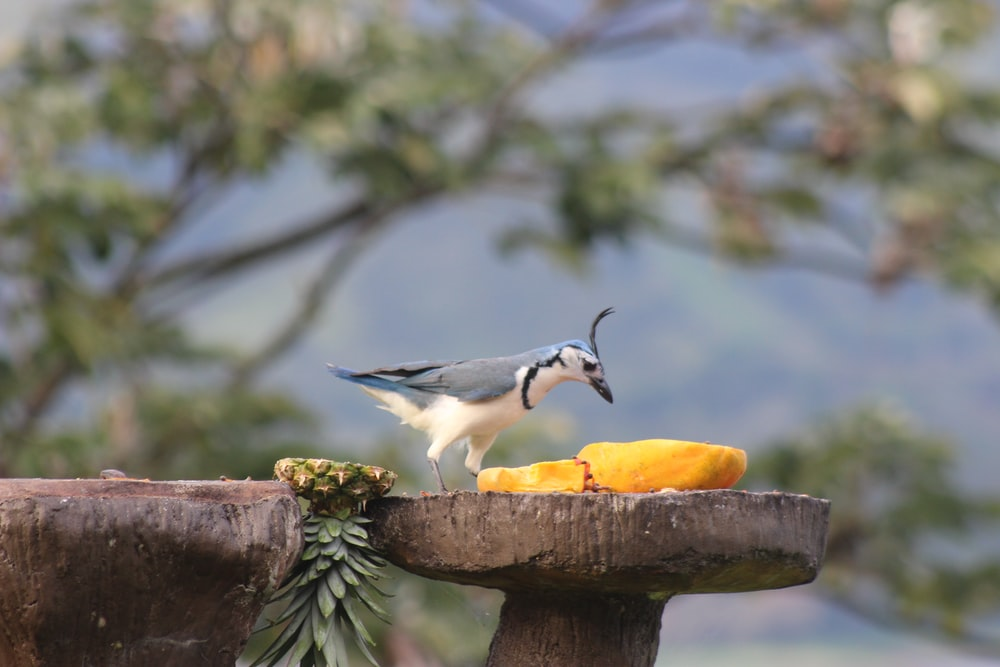 white and black bird on brown wooden log during daytime