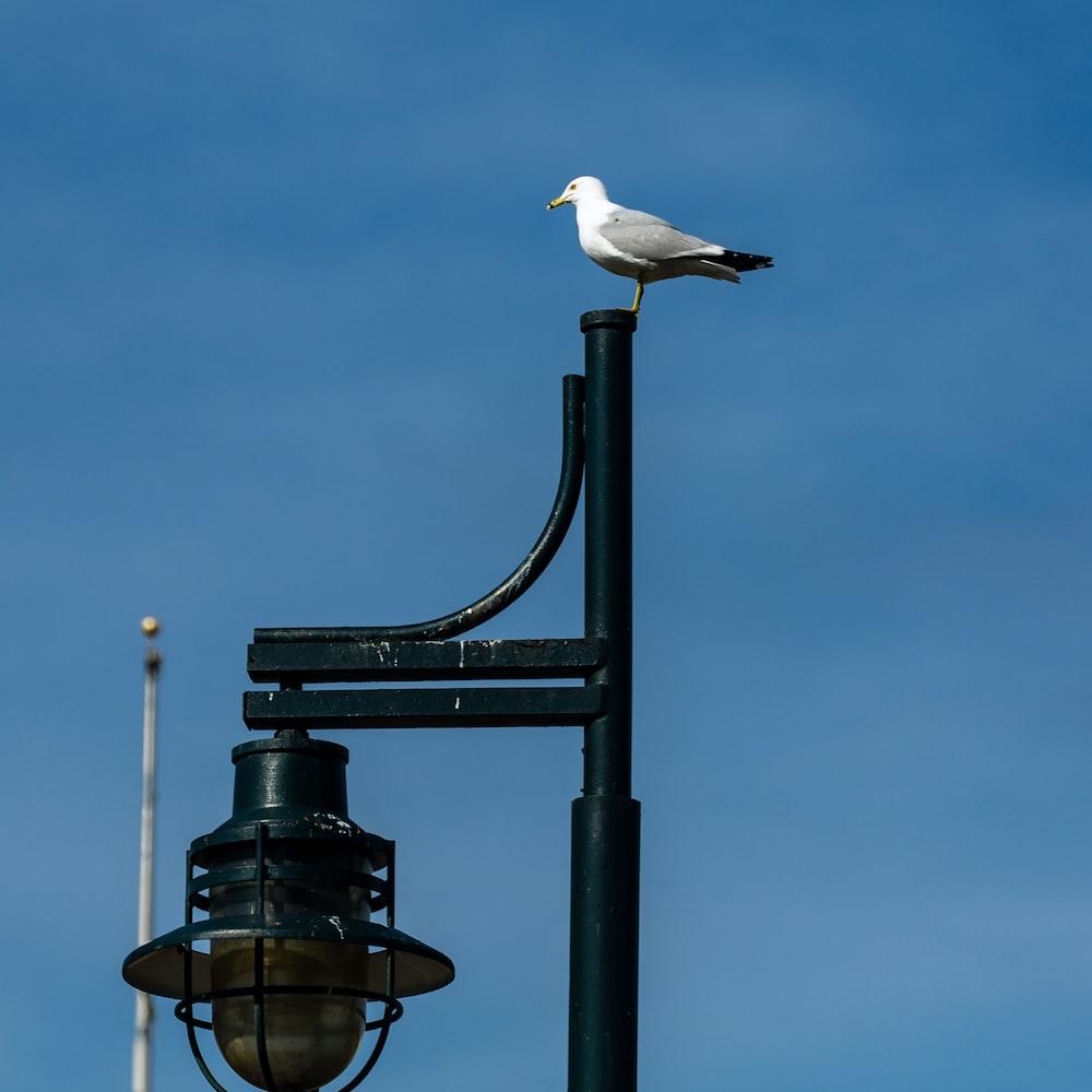 white bird on black metal stand during daytime