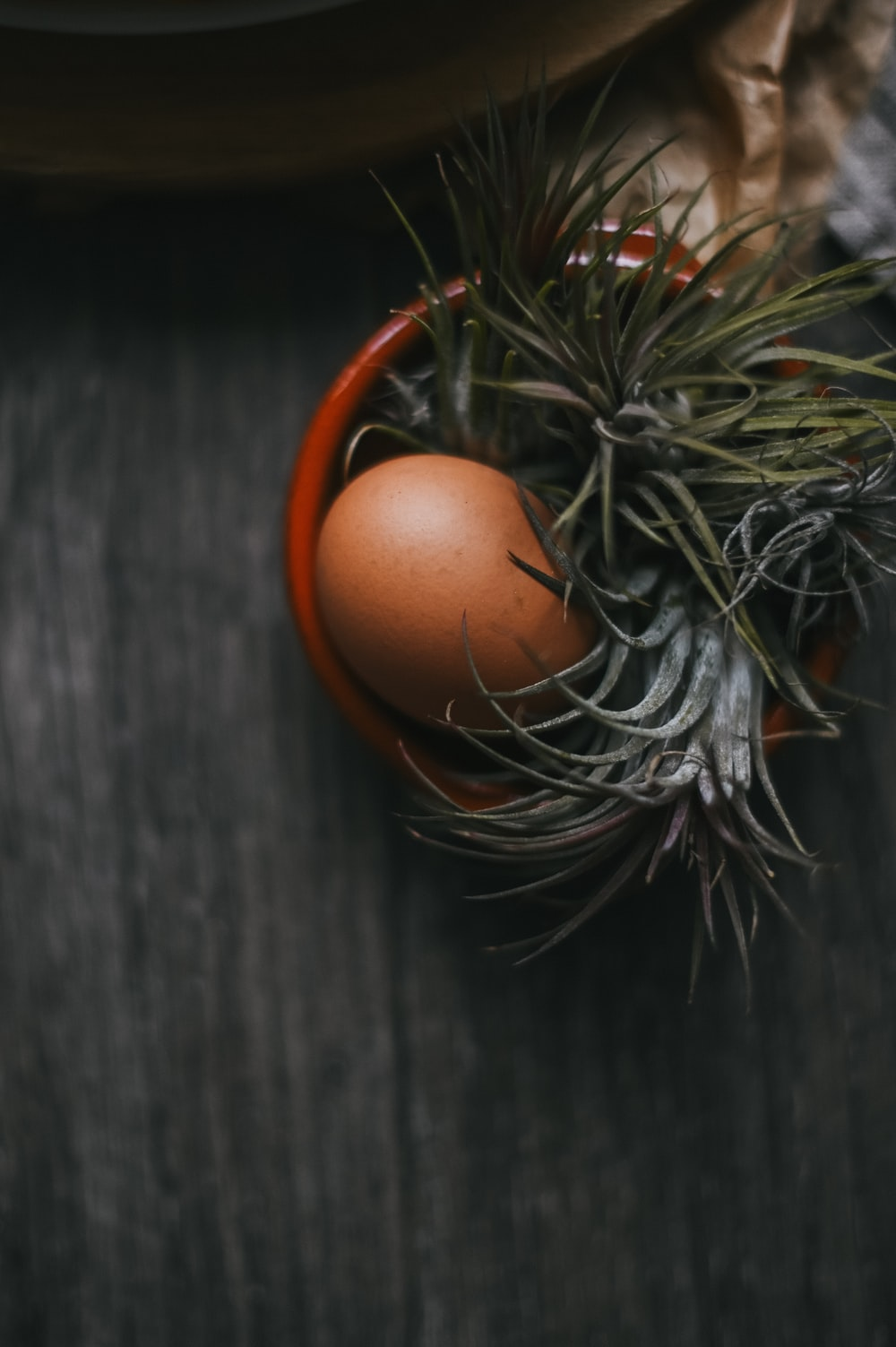brown egg on gray wooden surface