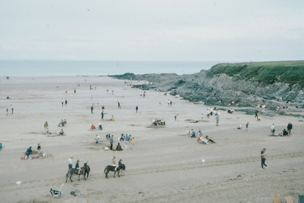 people on beach during daytime
