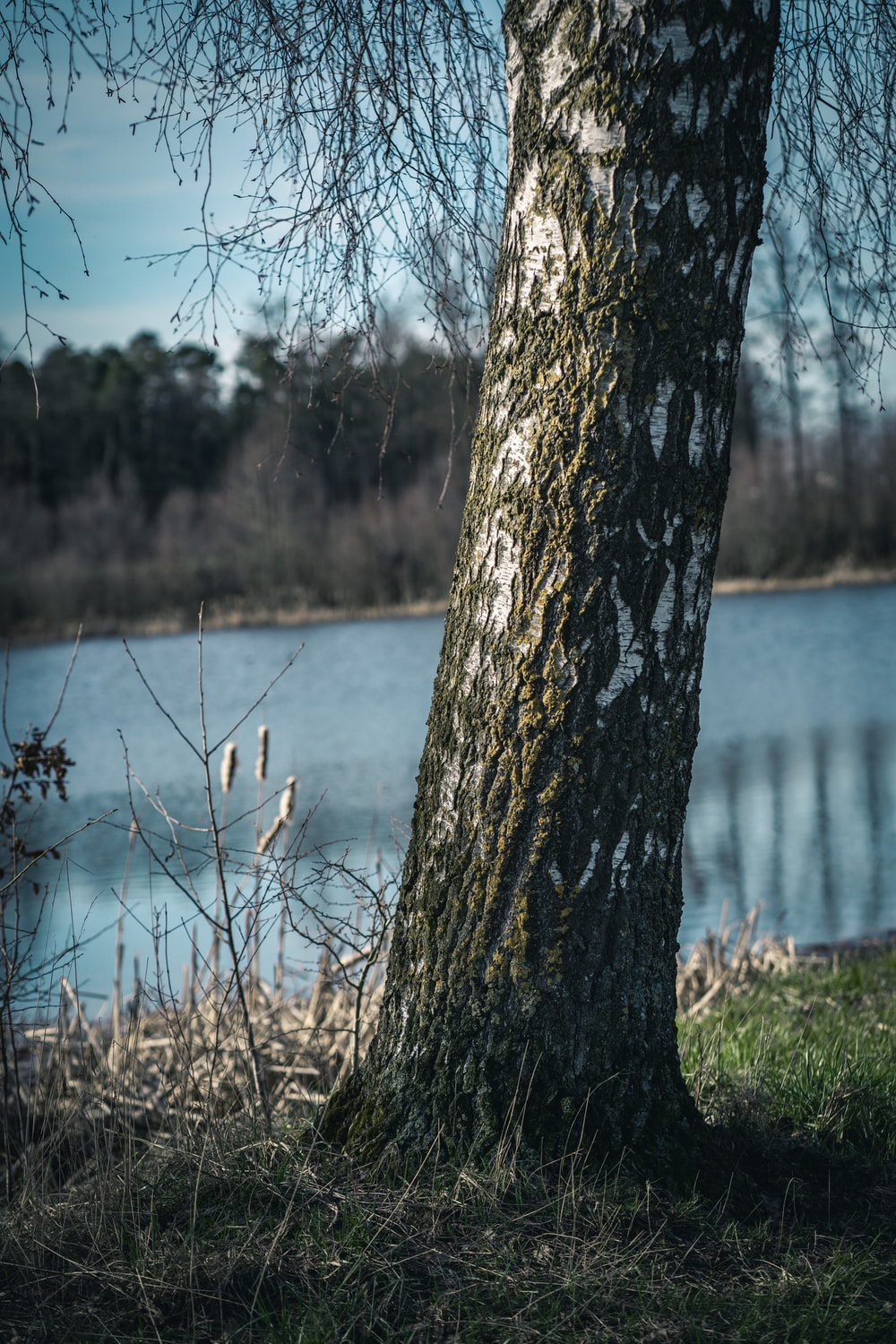 brown tree trunk near body of water during daytime