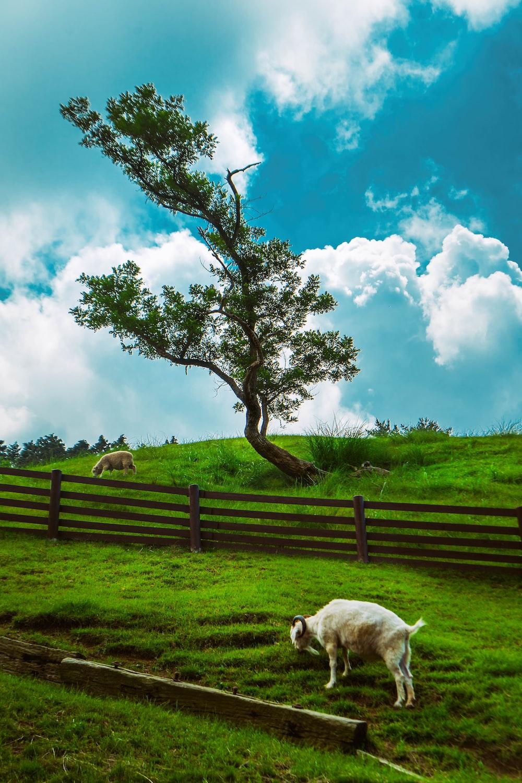 white dog on green grass field under blue sky during daytime