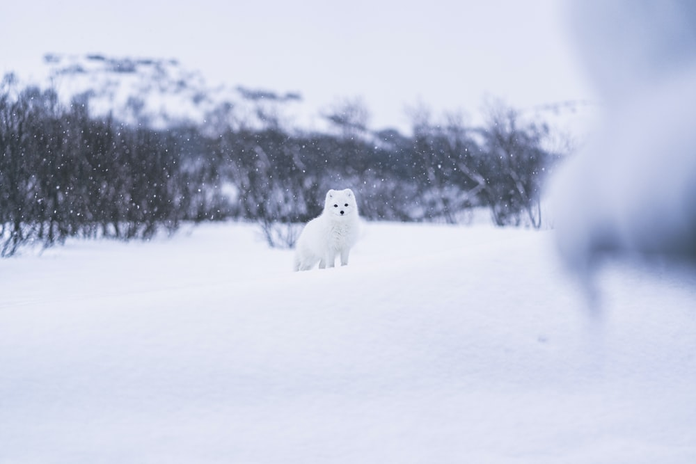 white snow covered white dog on snow covered ground during daytime