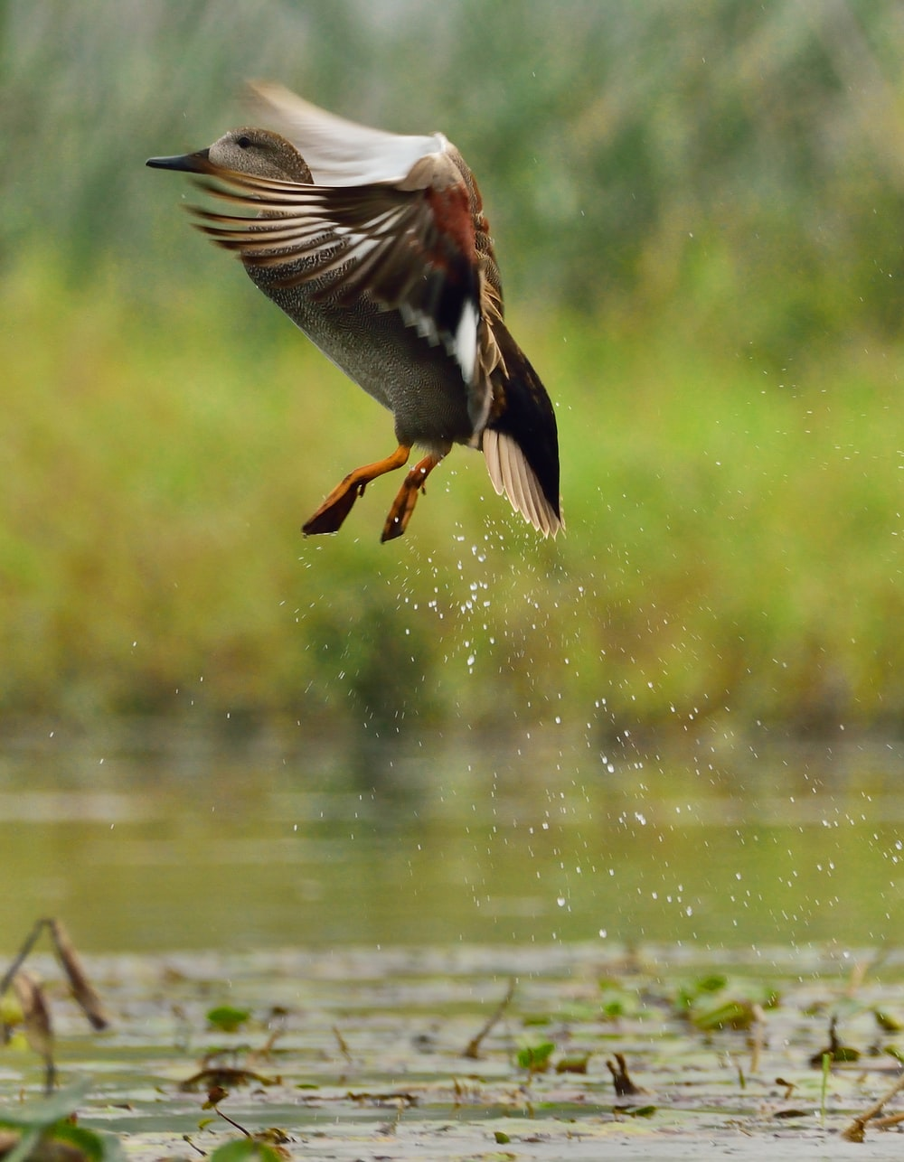 brown and white bird flying over body of water during daytime