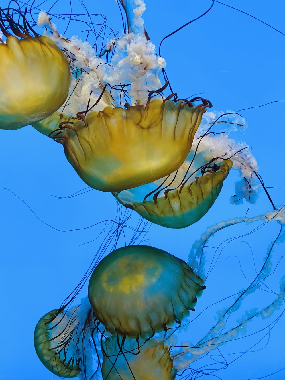 yellow jellyfish in blue water