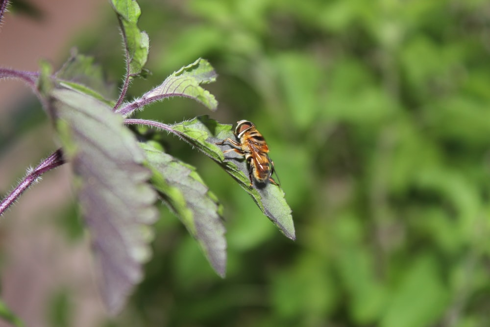 yellow and black bee on green leaf during daytime