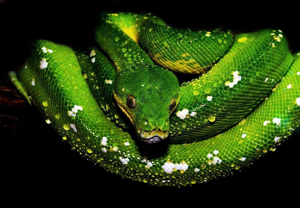 green and white snake illustration