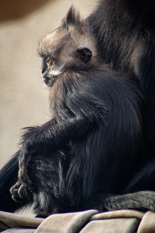 black monkey sitting on brown floor